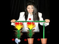 Cane to Flower and Flower to Cane  - foto principal 1