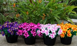 Appearing 4 Flower Pots from Tube  - foto principal 1