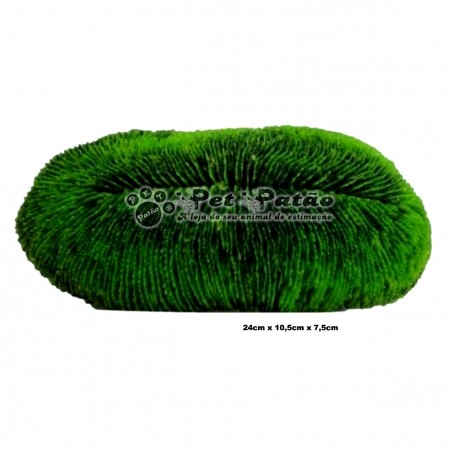 CORAL TONGUE VERDE SOMA 022013 - PET PATAO