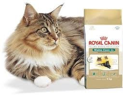 ROYAL MAINE COON ADULTO 3KG UN
